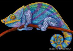 Parson's Chameleon Colored Pencil Drawing. *Signed by Artist*