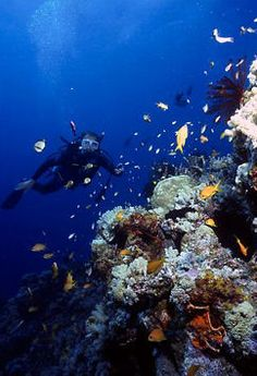 reef diving - Google Search