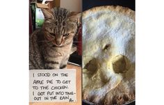 21 Hilarious Photos Of Cats Being Shamed For Their Crimes (Slide #36) - Pawsome