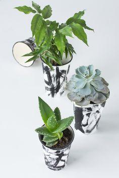 DIY: Rostliny jít