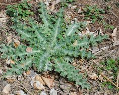 Almost Organic Weed Killer Spray Recipe From Your Kitchen: 1/2 gallon of Apple Cider Vinegar  1/4 c table salt  1/2 tsp Dawn liquid dish soap  Mix and pour into a spray bottle    Spray weeds thoroughly.  It makes 1/2 gallon for around $6.40  It worked better than Round Up & killed the weeds on first application.  The Dawn dish soap strips the weed of it's protective oils so the vinegar can work with deadly force. Safe to use a yard used by pets.