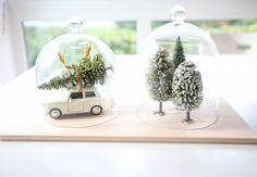 Pinheirinho, pinheirinho,… Terrarium, Snow Globes, Create, Home Decor, Pine Tree, Terrariums, Decoration Home, Room Decor, Home Interior Design