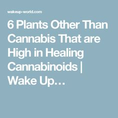 6 Plants Other Than Cannabis That are High in Healing Cannabinoids   Wake Up…