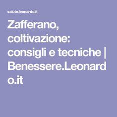 Zafferano, coltivazione: consigli e tecniche | Benessere.Leonardo.it
