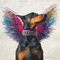 I love this concept!! really love it #doglovers #dogs #doberman #dobermanpinscher #doglovers