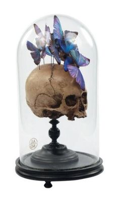 Skull: #Skull in cloche jar, with butterflies.