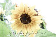 Sunflower Enhanced  8x10 Print by LedByLight on Etsy,