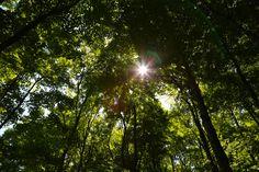 Shining Light by Grant Shepherd on 500px