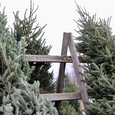 Candles & Greenery - definitely my go to during the holidays 🌲 the simpler the better - and I absolutely the love the smell of pine ! Christmas Tree Farm, Outdoor Christmas, Christmas Time, Christmas Inspiration, Greenery, Candles, Simple, Winter, Plants