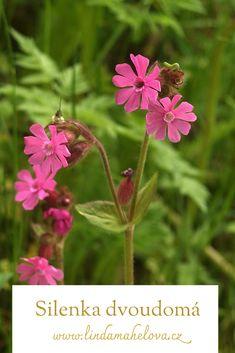 Herbs, Natural, Plants, Herb, Plant, Nature, Planets, Medicinal Plants, Au Natural
