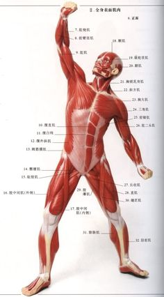 人體各種動作的完成主要是透過...