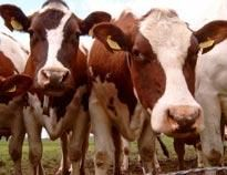 Animal Legal Defense Fund:Animal Protection Groups Urge New Hampshire House Environment and Agriculture Committee to Oppose Harmful Ag-Gag Bill aldf.org