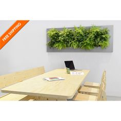 Place the modern LivePicture IV wall planter in your home or office for the perfect combination of plants & art! Easy to install & can hold water for 4-6 weeks!