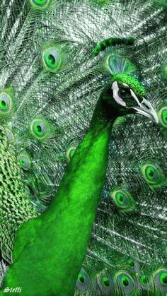 Decent Image Scraps: Birds