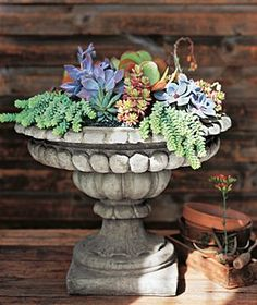 Container gardening with an old bird bath.