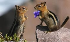 Chipmunk Love Is that all you could afford just one flower!~