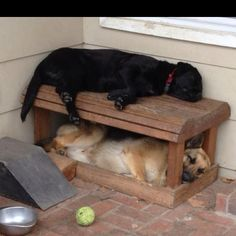 I guess they think the bench is a doggie bunk bed!