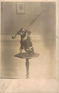 Vintage photo, small dog in a strange outfit (wearing a basket!) with pipe.