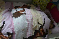 Pferde Bettwäsche. – GagaYa