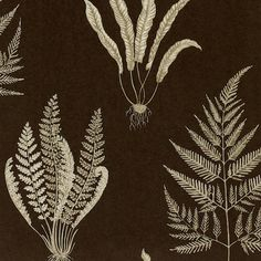Woodland Ferns DAPGWO104 Designer Fabrics and Wallpapers by Sanderson, Harlequin, Morris, Osborne, Little And many more