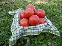 Si quieres tomate de sabor, el Tomate Label es lo que buscas! Cómpralo directamente en el perfil de Barrentxe, en hermeneus.es