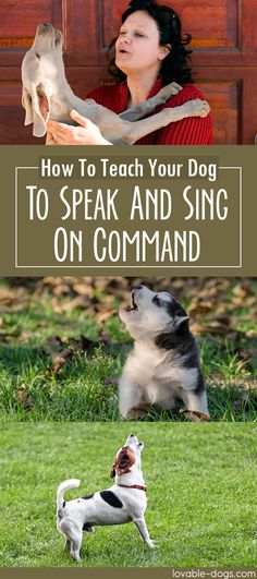 How To Teach Your Dog To Speak And Sing On Command	►►	http://lovable-dogs.com/how-to-teach-your-dog-to-speak-and-sing-on-command/?i=p