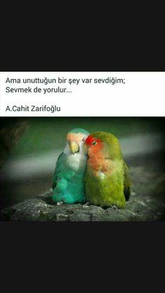 Sevmekte yorulur Cahit Zarifoğlu