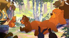 Em Irmão Urso, as crianças são apresentadas à natureza sob o olhar de um animal