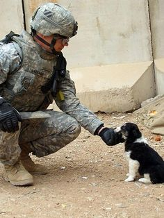 """The Puppy and the Soldier  """"A U.S. Army Soldier with 4th Brigade Combat Team, 3rd Infantry Division pets a puppy adopted by the Musayyib Iraqi police station in Musayyib, Iraq, March 11, 2008."""""""