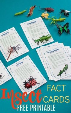 Insect fact cards for a preschool insect theme - teach your preschooler all the best bug facts with this free printable. set of insect fact cards. These are perfect to add to your preschool science center during your bugs and butterfly theme. Preschool Bug Theme, Free Preschool, Preschool Printables, Preschool Science, Preschool Lessons, Kindergarten Activities, Science Activities, Preschool Curriculum, Science Education