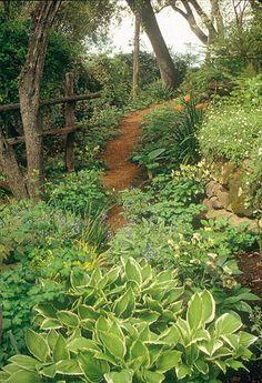 Woodland garden ideas   Gardens   Shade Woodland   Michael Bates - English Country Garden ...