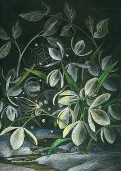 ✯ Snowdrops At Night .. By *JoannaBromley*✯