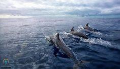 Dlefíni na dovolená na jachtě lokace: Kanárské Ostrovy
