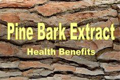 Pine Bark Extract Health Benefits