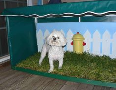 whoa. dog potty. I wonder if my dog would use this instead of the carpet?