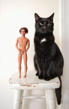 {Ken & the cat} ha!! this photo kills me!