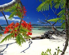 pictures of schelles | 21 May 2012 African cuisine Indian Ocean Seychelles Seychelles Islands ...