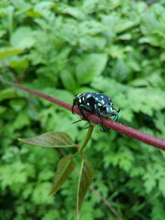 Bug's beauty