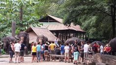 Many tourist visited here; Chiang Mai Elephant, Elephant Camp, Camping, Outdoor Decor, Campsite, Campers, Tent Camping, Rv Camping