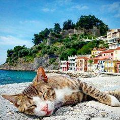 Lazy summer days are coming. Photo by @theofano.b #Parga #Preveza #Kanallaki #cat #lazysummerdays #summerloading #Greece #greecestagram #greecestagramit