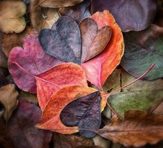 Fall In Love (Explore October 18, 2013) by Anne Worner on Flickr.