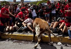 """Revelers move away to avoid being tossed by a bull during the """"Jala Toro"""" or """"Pull the Bear"""" celebration in downtown Ayacucho, Peru, Saturday, March 30, 2013. The Jala Toro is a """"running of the bulls"""" celebration, similar to Spain's Encierro, where bulls are let loose and revelers run around them, except that in Ayacucho's Holy Week, they are led by horsemen called """"Morocuchos"""", the cowboys of the Peruvian Andes. (Photo by AP Photo/Rodrigo Abd)"""