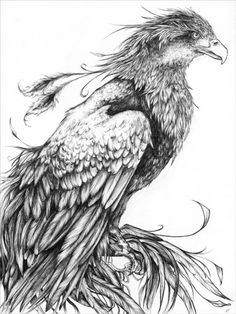 Just a drawing, but I can see it down up the side or down a shoulder. Fawkes the Phoenix by ~Jiinx-Magic on deviantART
