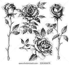 Excellent Absolutely Free rose drawing thorns Thoughts With this training, we'll check out precisely how to draw in some sort of rose by using pastels. Were utilizing paste Fake Tattoos, Trendy Tattoos, Flower Tattoos, Black Tattoos, Body Art Tattoos, Sleeve Tattoos, Dorn Tattoo, Botanisches Tattoo, Vintage Rose Tattoos