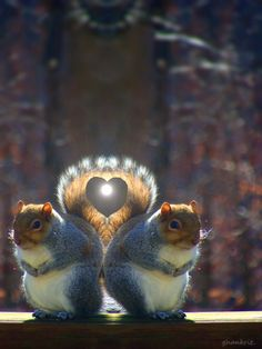 ♥ Squirrel love