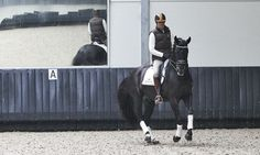 dressage training | Tumblr