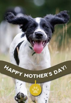 """The best mommy at the dog park"" printable card. Customize, add text and photos. print for free! #Mother's day #Card"