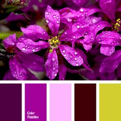 """""""dusty"""" yellow color, Brown Color Palettes, creamy-yellow color, dark lilac color, dark pink color, intense lilac color, light pink color, lilac shades, pale pink color, palette matching for apartment, pink shades, spring colors 2016."""