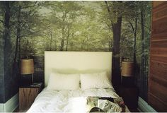 Forrest trees wallpaper