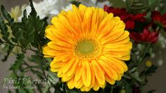 Digital print digital picture red flower yellow by pixelphotogift